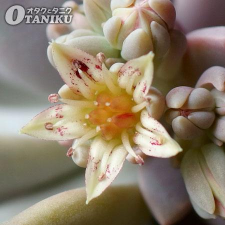 淡雪の花1