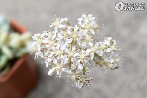 ロッティーの花2